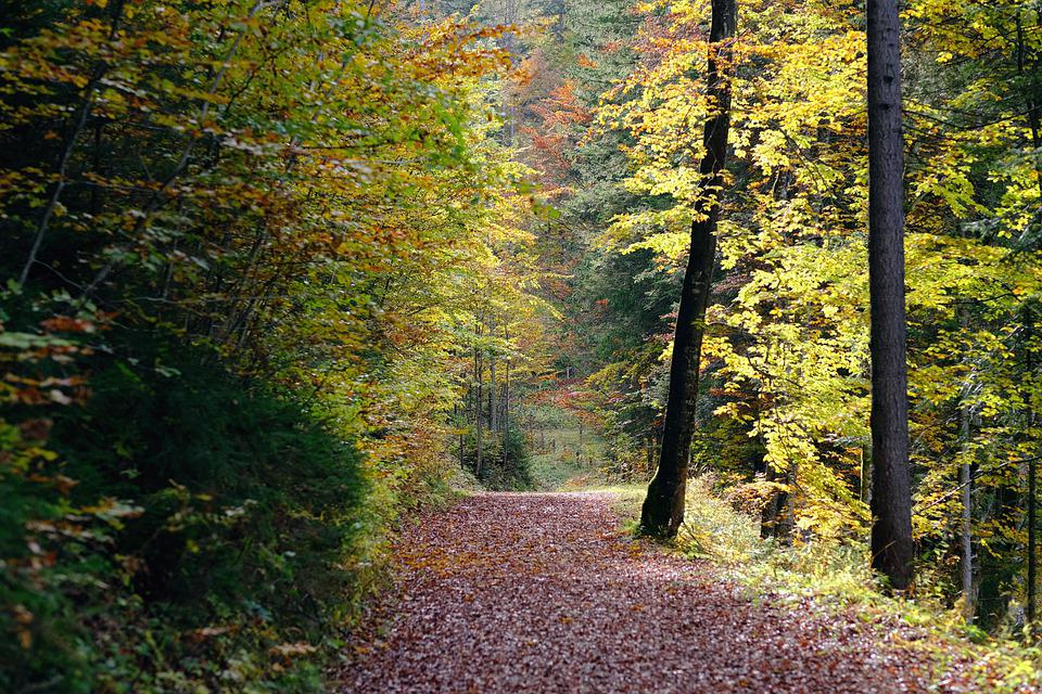 Trail, Forest, Landscape, Path, Trees, Woods, Woodland
