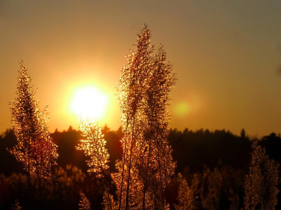 Sun, Sunset, Light, West, Landscape, Summer, Yellow