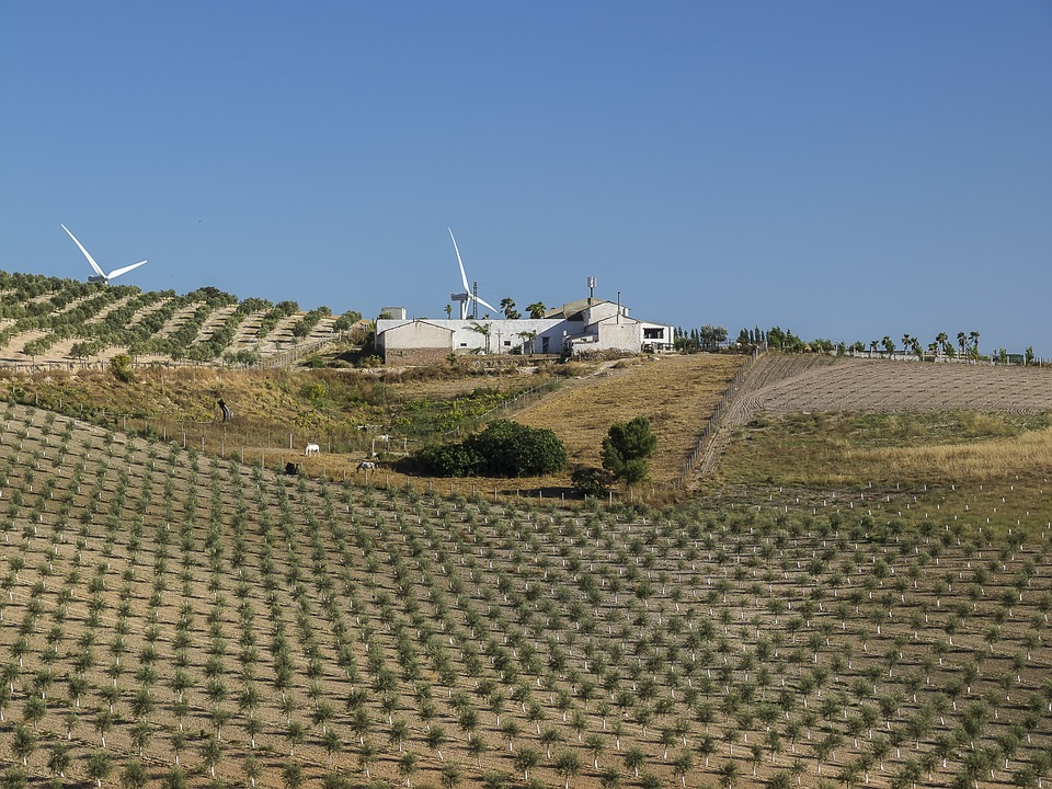 Landscapes, Nature, Farmhouses, Olive Trees, Field