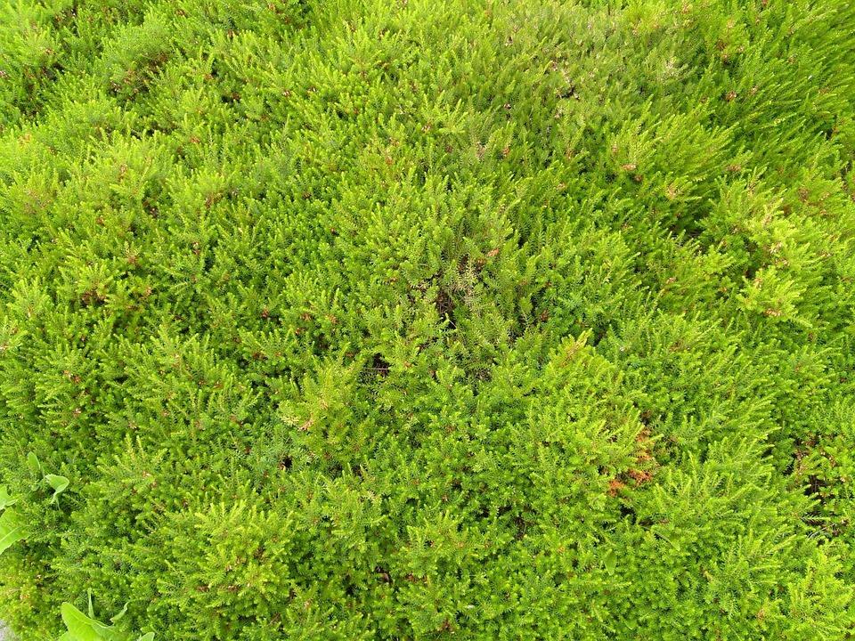 Short, Variety, Grass, Landscapes, Nature