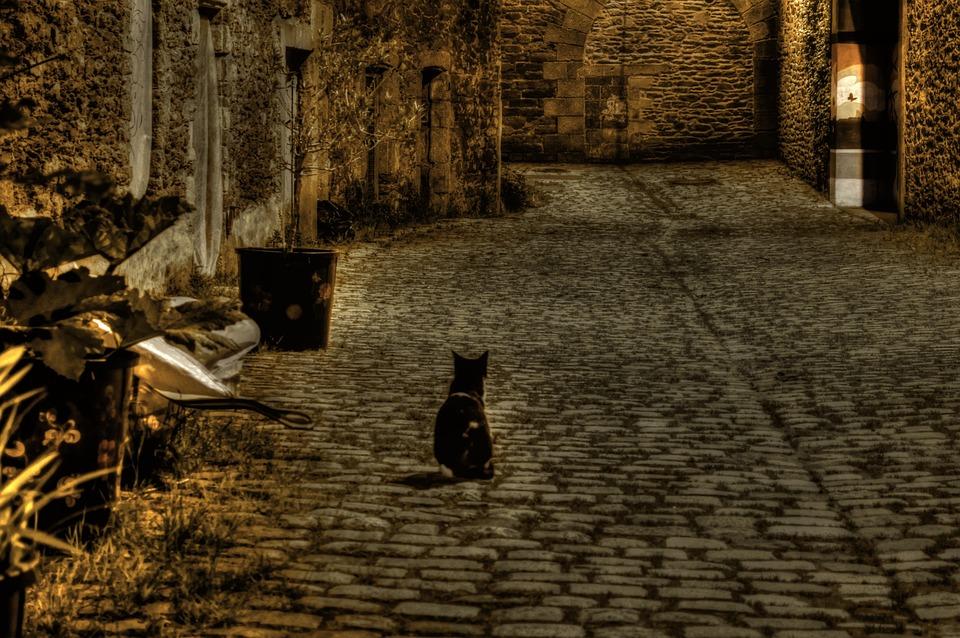 Cat, Street, Lane, Night, Old, Pierre, Pavement