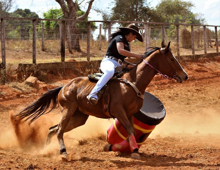 Horse, Drum, Lane