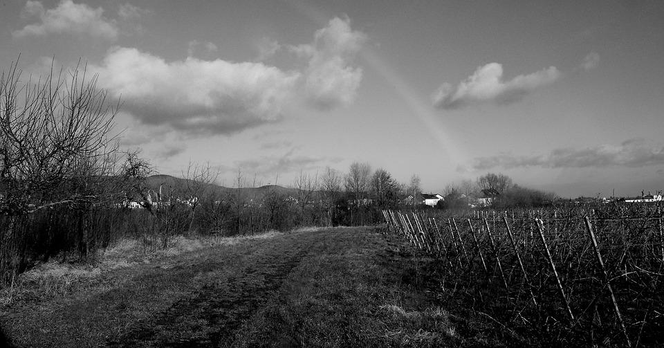 Black And White, Lane, Landscape, Rainbow