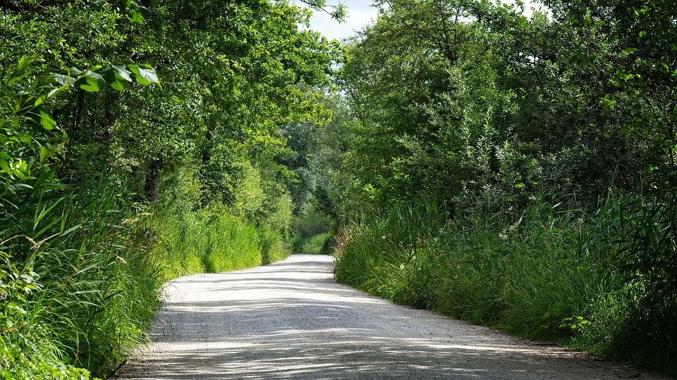 Nature Trail, Away, Nature, Trees, Lane, Trail