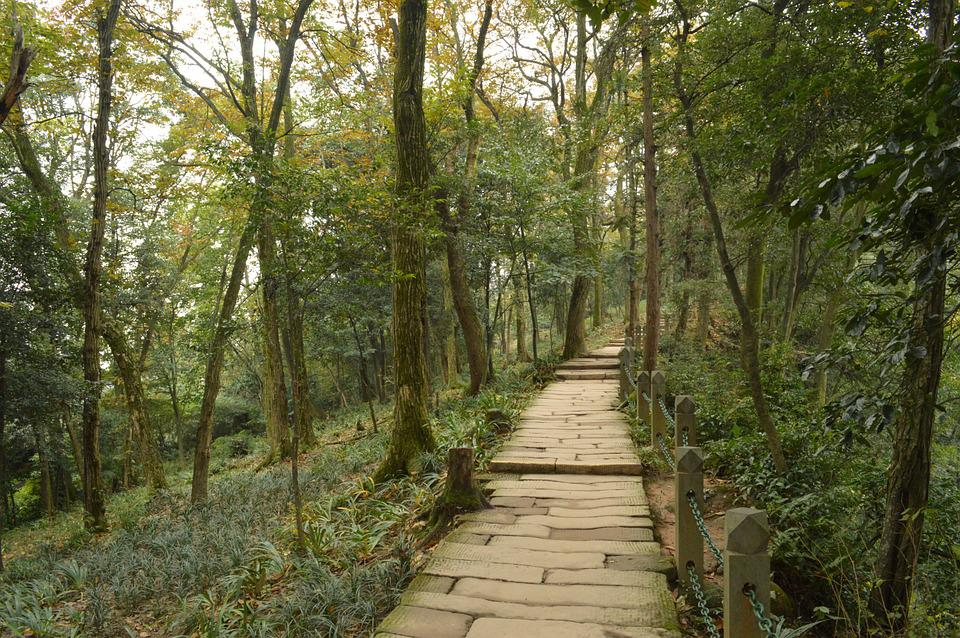 Qingcheng Mountain, Lane, The Silence