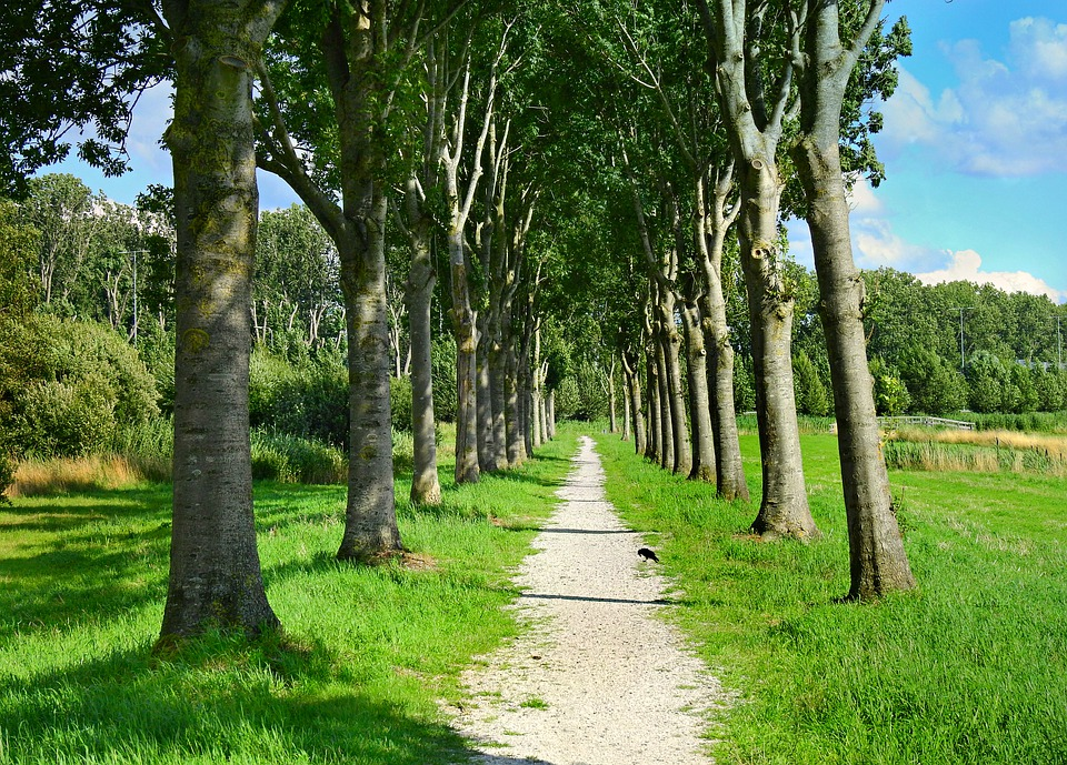 Lane, Path, Tree Lined, Trees, Landscape, Trunk, Grass