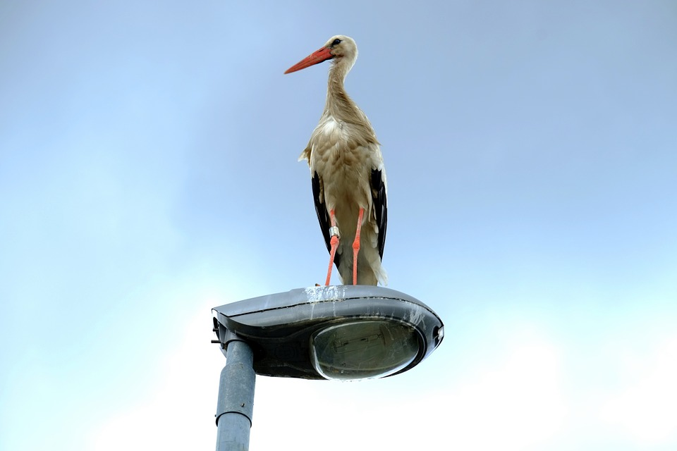 Stork, Street Light, Rest, Lantern, Break, Recover