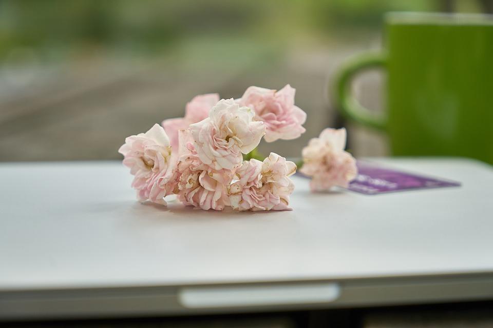 Laptop, Flower, Computer, The Work, Technology, Contact
