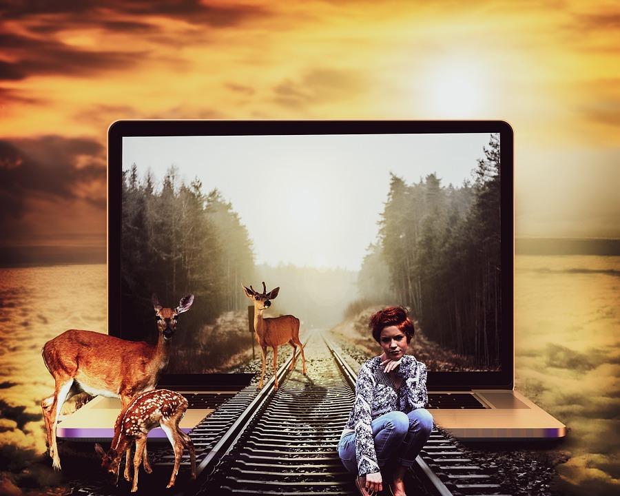 Laptop, Railway, Train, Woman, Track, Deer, Clouds