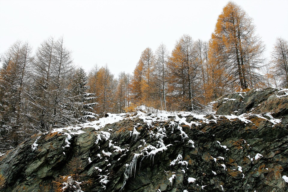 Forest, Larch, Rocks, Winter, The Height Of The, Snow