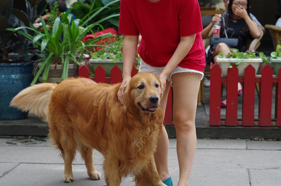Dog, Large Dogs, Wetlands