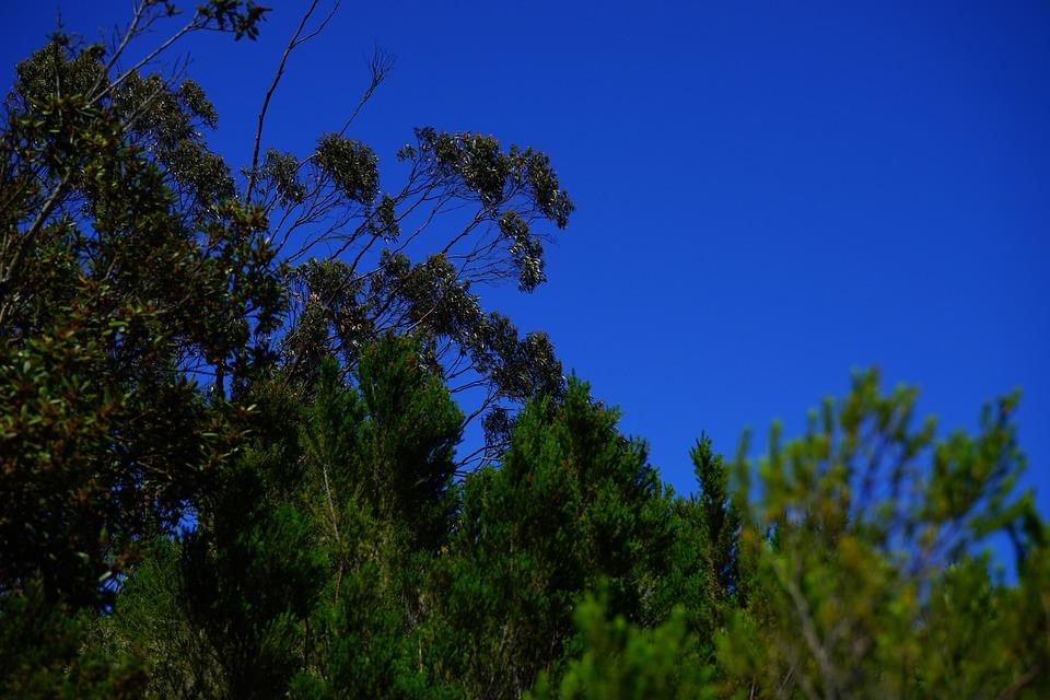 Forest, Scrub, Tree Heath, Laurel Tree, Laurel Forest