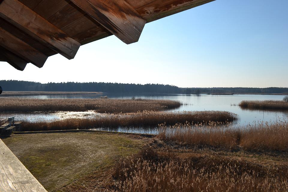 Pond, Water, Lausitz, Reed, Nature, Wood, Hut