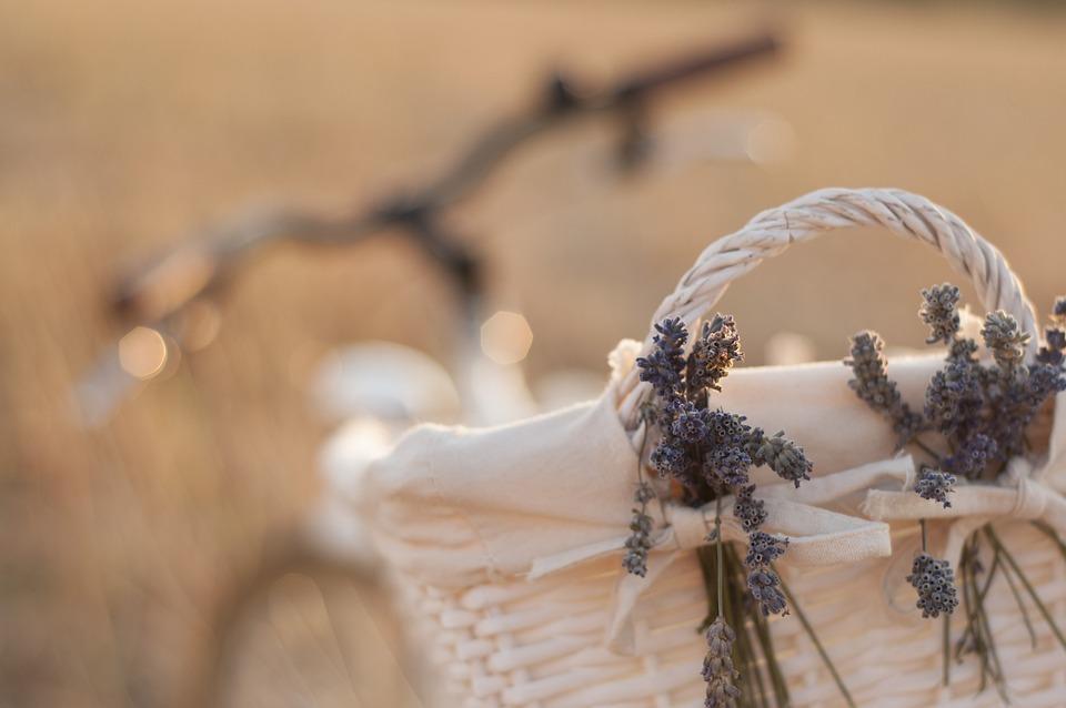 Bike, Lavender, Cart, City, White