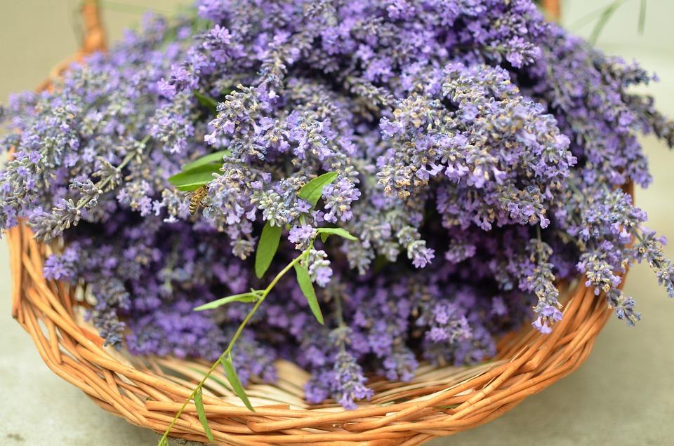 Lavender, Basket, Bee, Purple, Flowers, Aroma