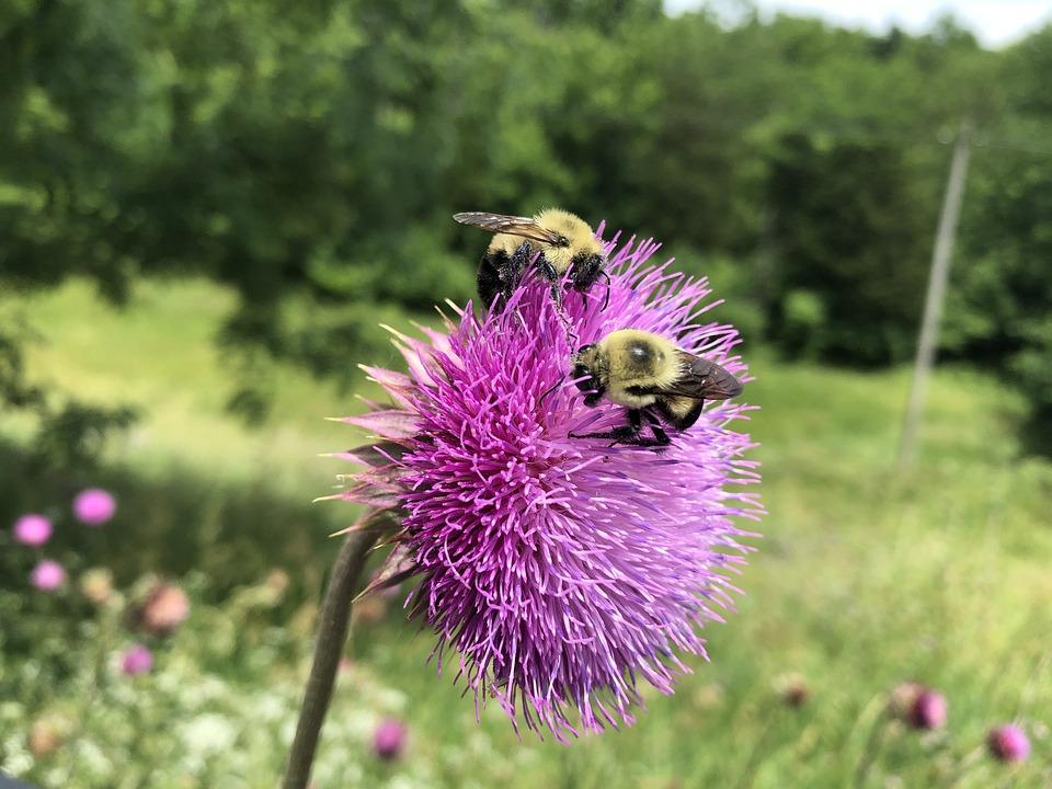 Bees, Flower, Spring, Lavender, Pollen, Pollination