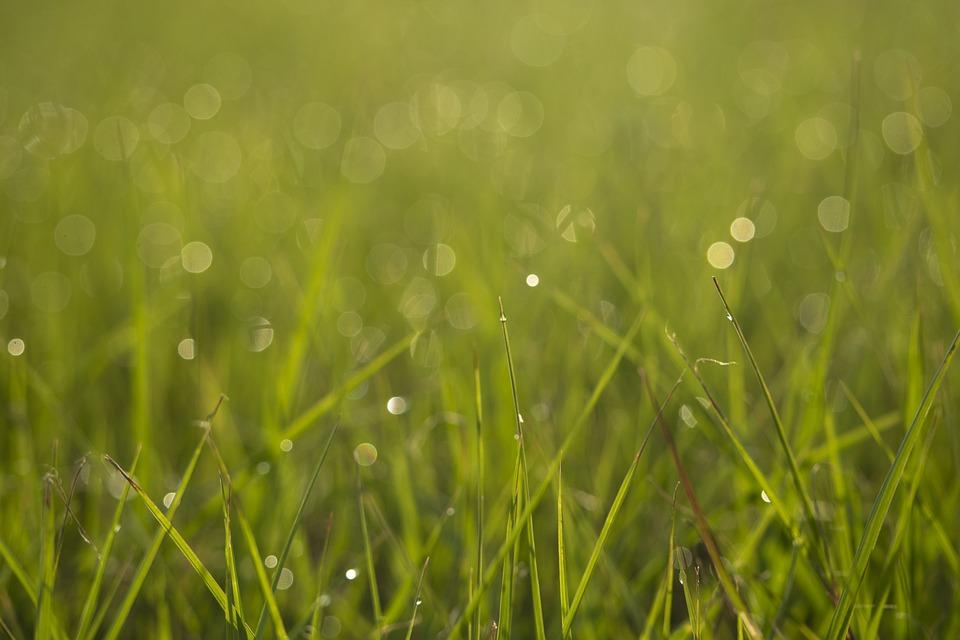 Bokeh, Greenspace, Grass, Backyard, Yard, Lawn