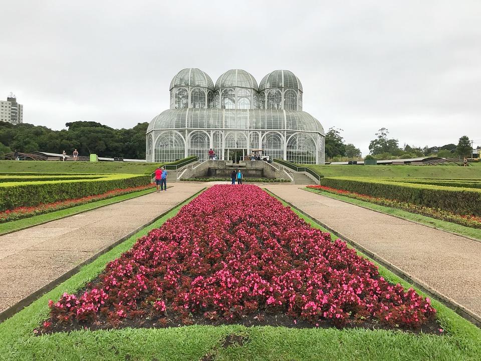 Flower, Lawn, Field, Plant, Botanical Garden, Curitiba