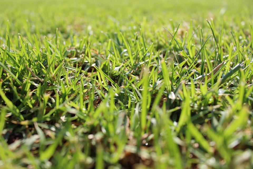 Lawn, Grass, Golf, Garden, Landscape, Green, Prairie