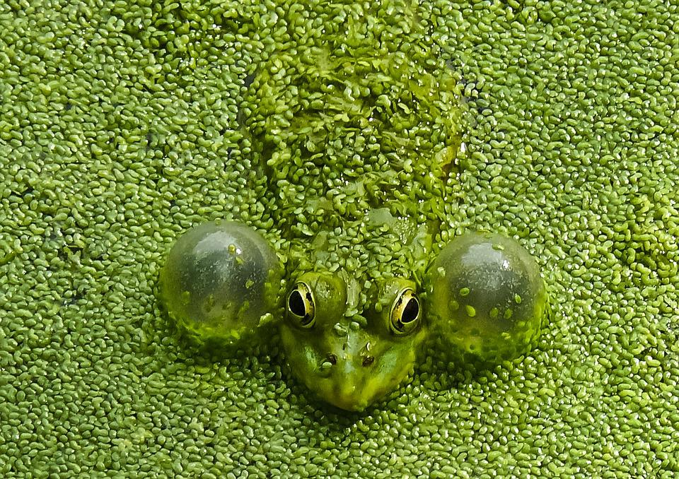Nature, Lawn, Frog, Green, Insect
