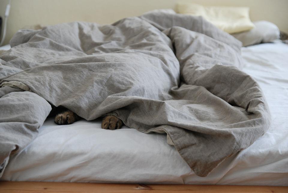 Sunday, Bed, Lazing Around, Lazy, Cozy, Sleep, Blanket