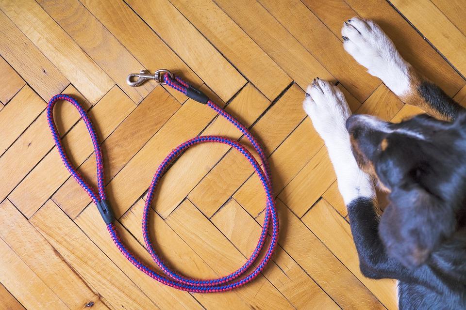 Dog, Canine, Leash, Dog Leash, Lead, Dog Lead, Dog Walk
