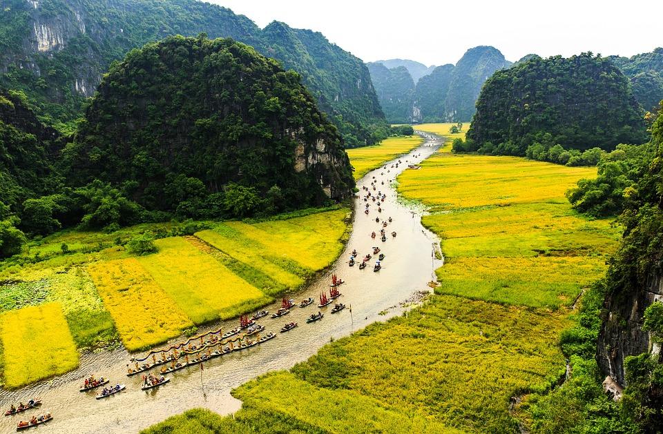 Rice Field, Dragon Boats, Water, Boat, Leader