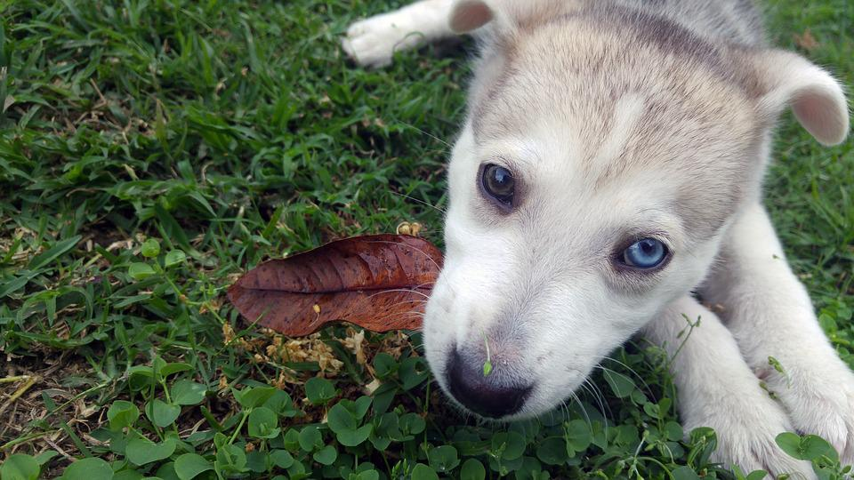 Cute, Adorable, Puppy, Dog, Young, Leaf, Portrait