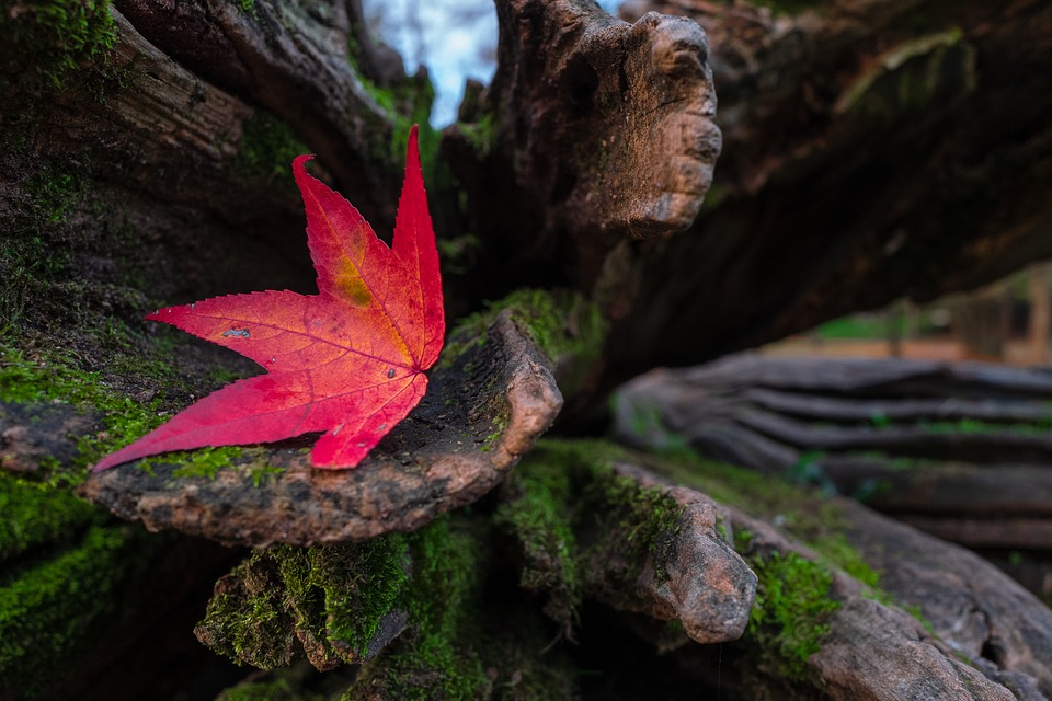 Leaf, Red, Autumn, Nature, Leaves, Colorful, Color