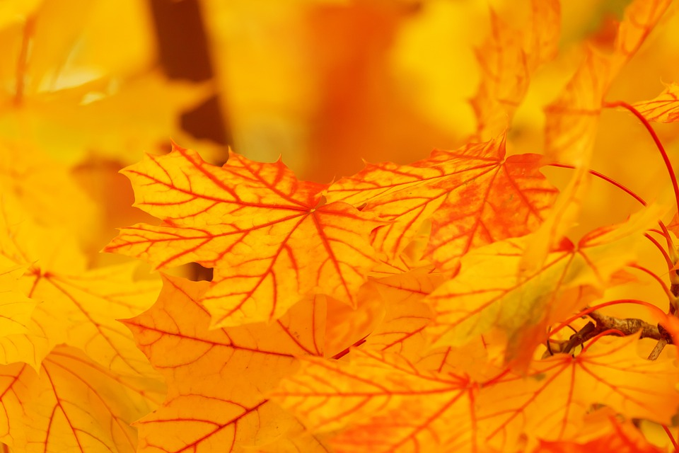 Abstract, Autumn, Background, Bright, Color, Fall, Leaf