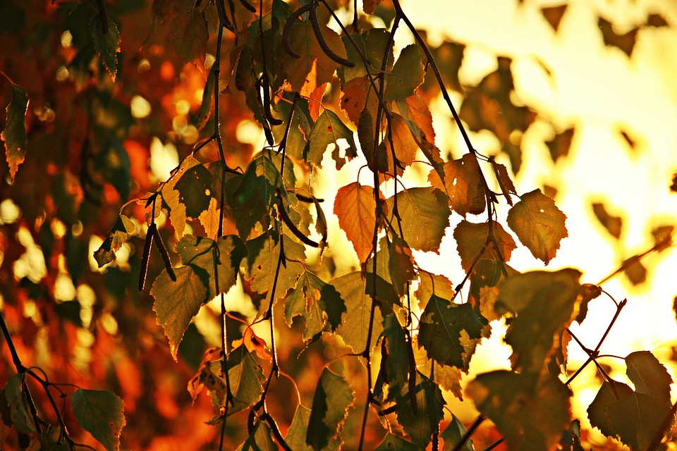 Autumn, Leaves, Autumn Gold, Fall Foliage, Leaf, Nature