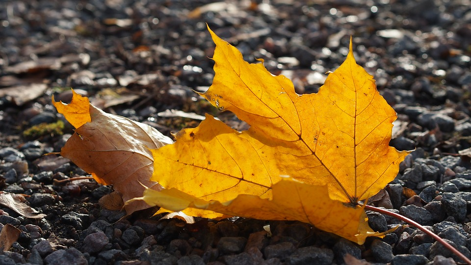 Leaf, Autumn, Color, Orange, Autumn Leaves, Fall