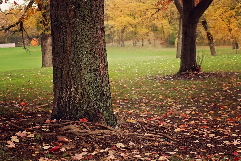 Fall, Tree, Leaf, Wood, Season, Autumn, Leaves, Nature