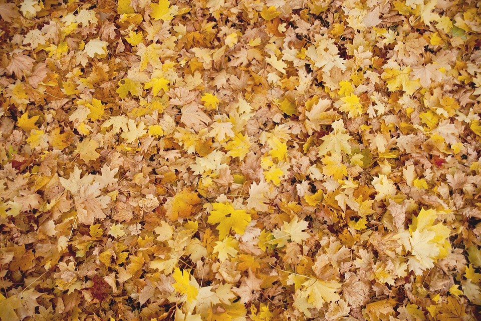 Autumn, Leaves, Background, Fall, Leaf, Season, Nature