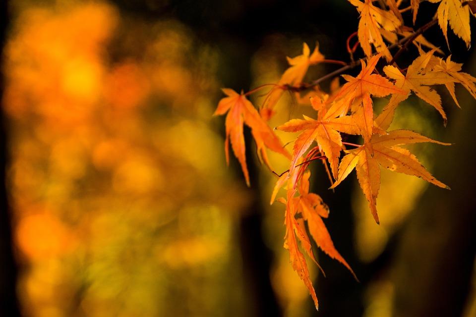Leaf, Nature, Autumn, Plant, Orange
