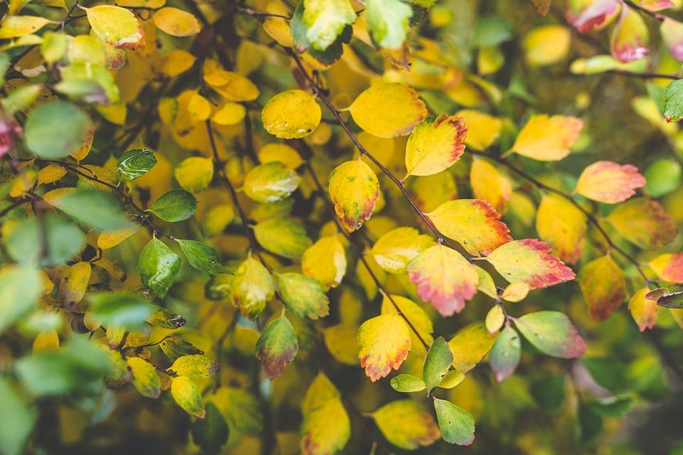 Small, Little, Leaf, Leaves, Autumn, Fall, Bush