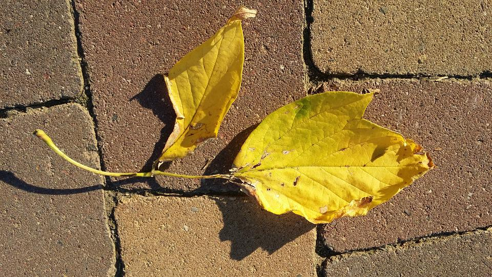 Autumn, Leaf, Yellow, Spacer