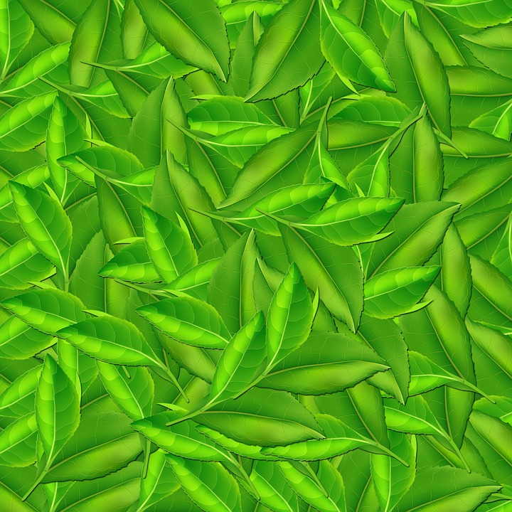Nature, Leaf, Background, Background Sheets