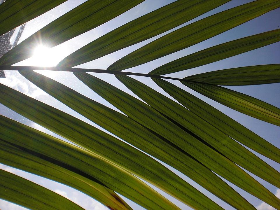 Leaf, Light, Sun, Sky, Meditation, Background