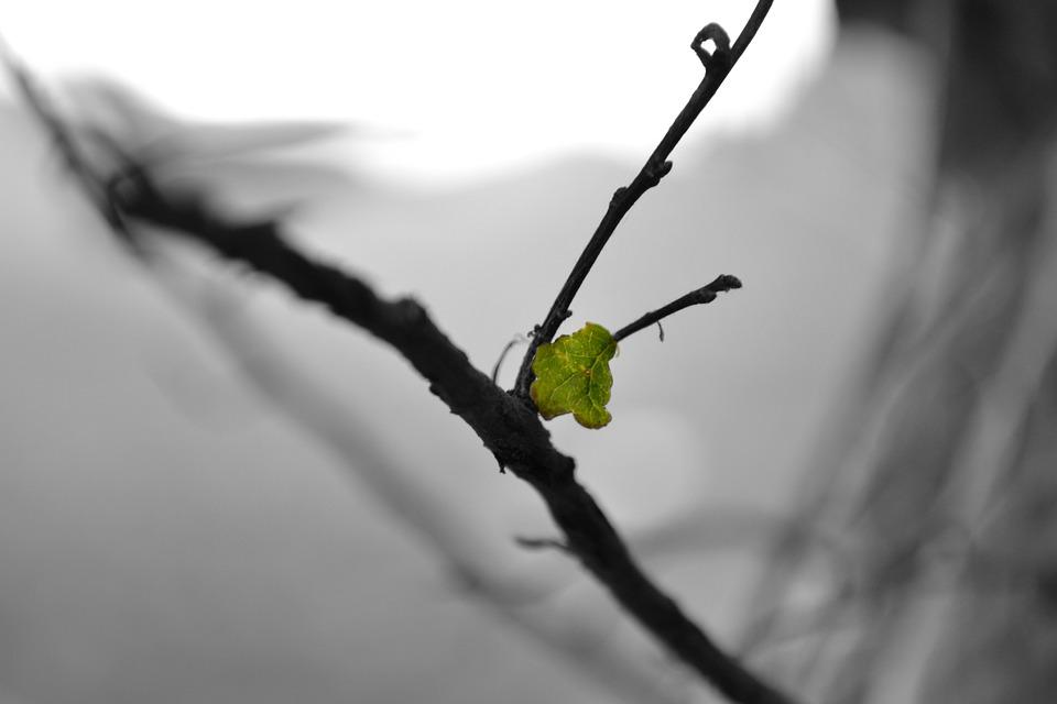 Leaf, Branch, Bw
