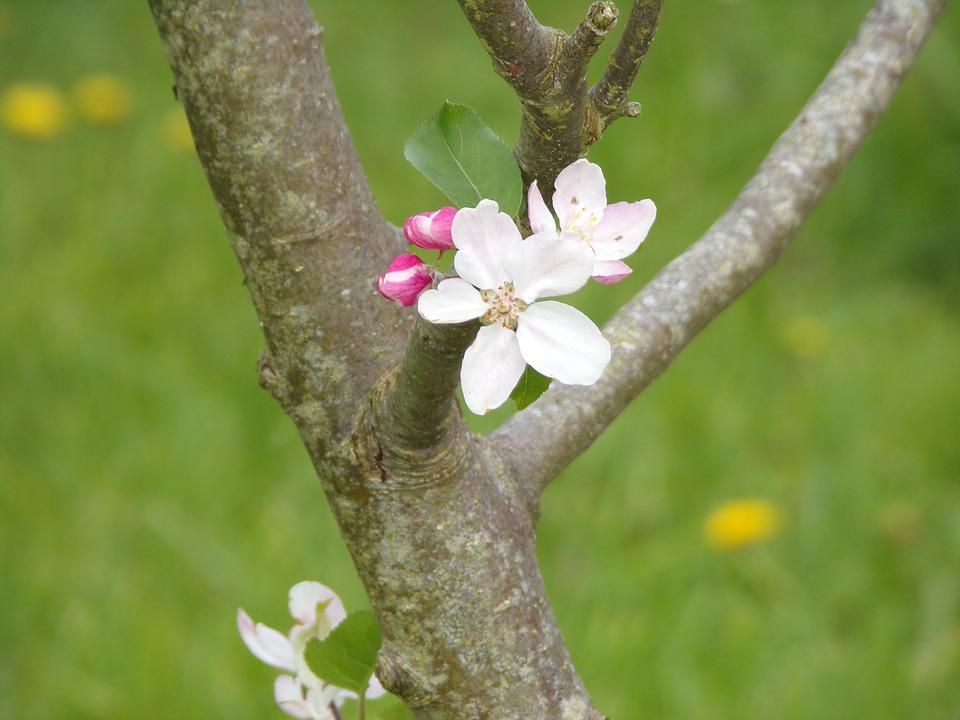 Tree, Nature, Flower, Branch, Plant, Outdoor, Leaf