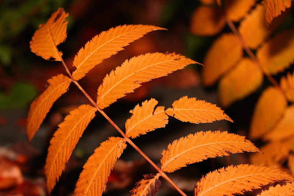 Leaves, Tree, Plant, Autumn, Garden, Leaf, Branches