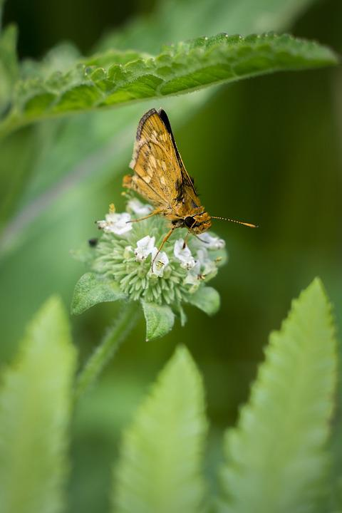 Nature, Butterfly, Insect, Leaf, Flora, Wildlife, Color