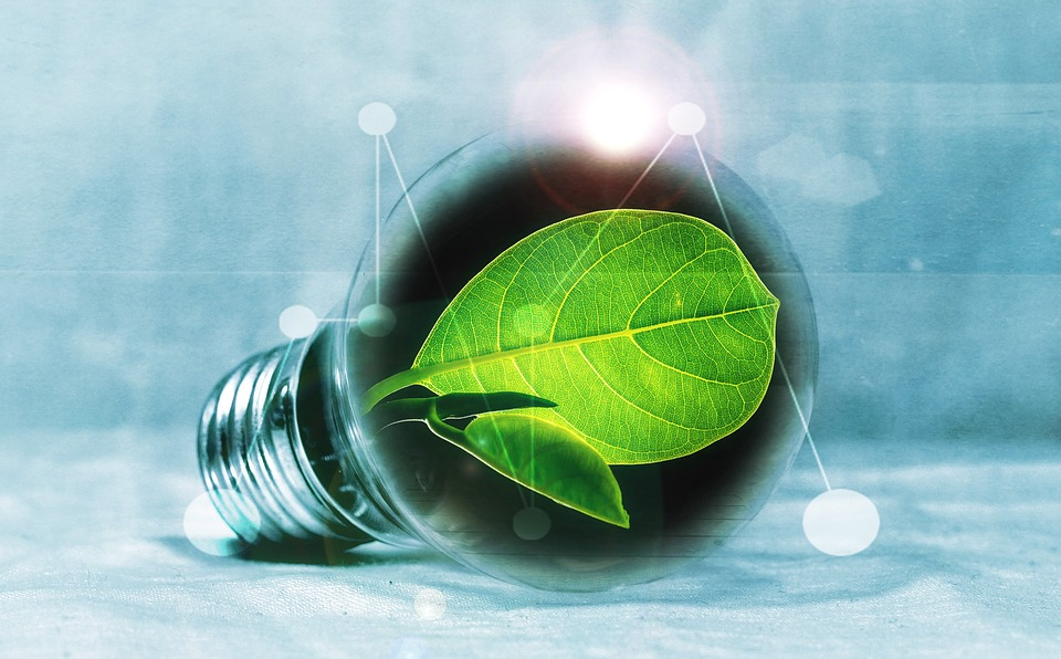 Light Bulb, Leaf, Chlorophyll, Green, Leaf Green, Light