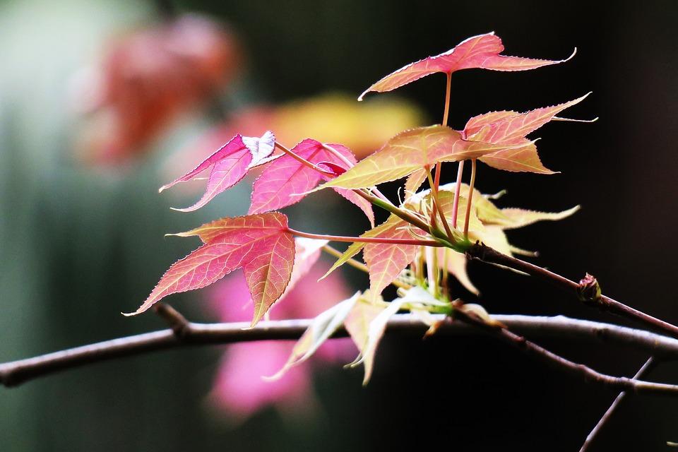 Leaf, Nature, Plant, Flower, Garden, Tree, Close-up