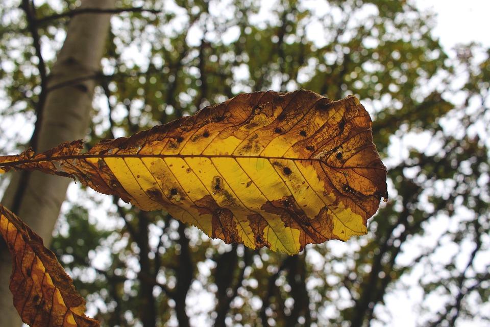 Autumn, Colorful, Leaf, Color, Nature, Season, Unique