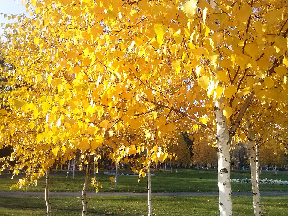 Nature, Autumn, Tree, Yellow, November, Colorful, Leaf