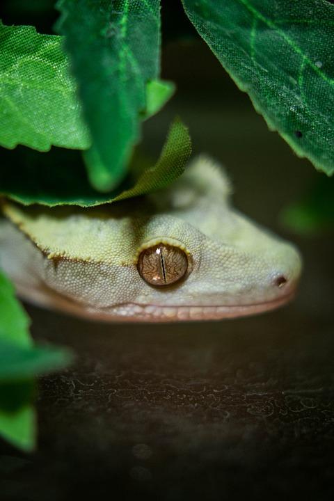 Lizard, Dragon, Leaf