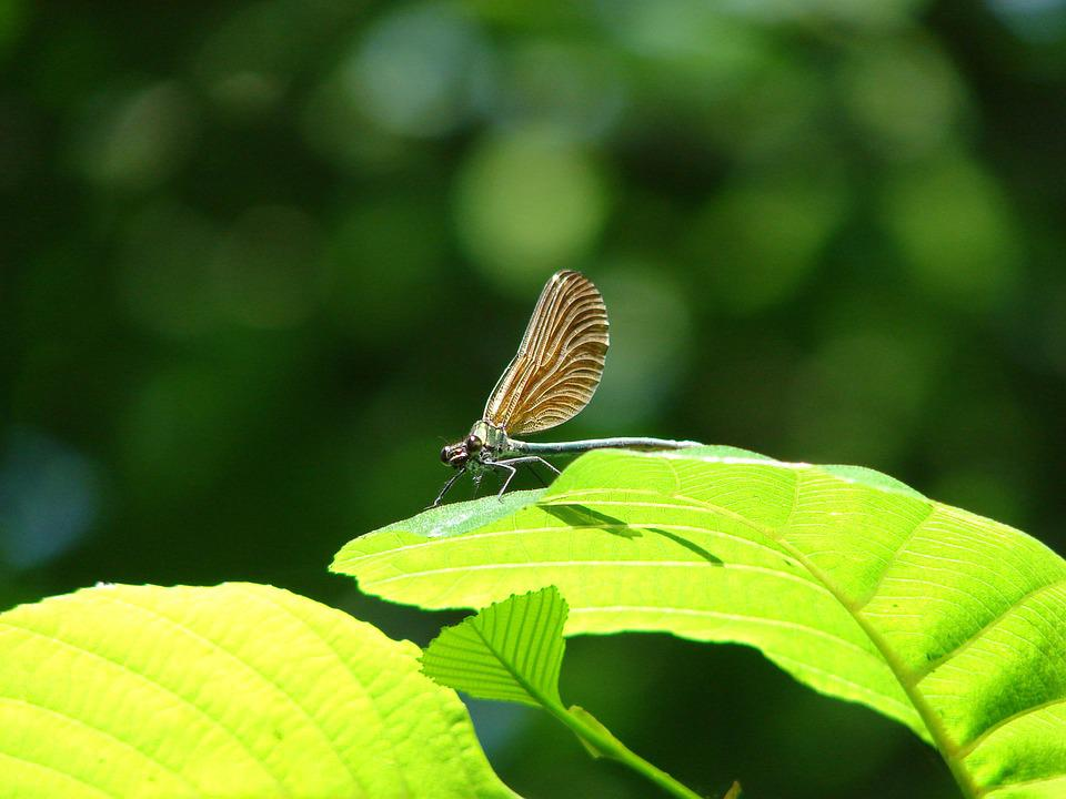 Nature, Leaf, Insect, Green, Dragonfly