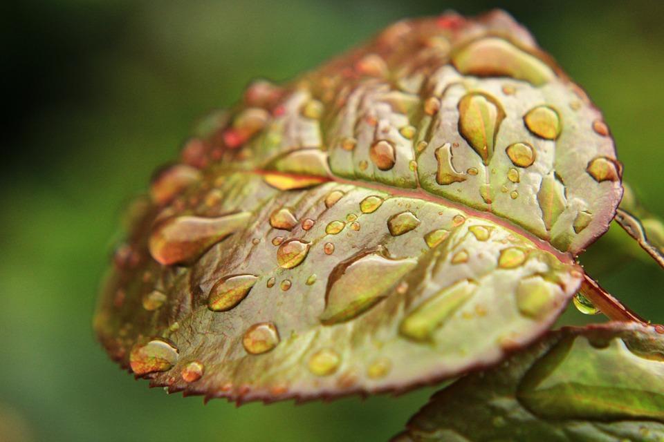 Leaf, Green, Green Leaf, Nature, Garden, Drop Of Water